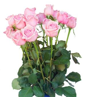 白い背景で隔離の新鮮なピンクのバラの束