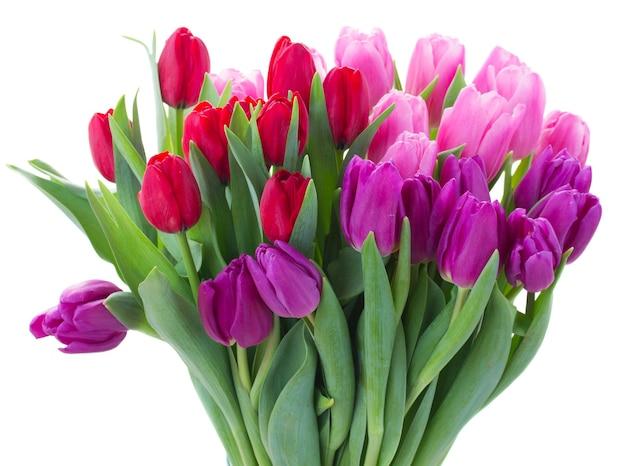 Букет из свежих красных, розовых и фиолетовых цветов тюльпана крупным планом на белом