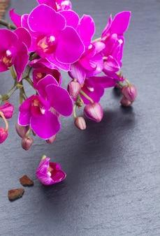 黒の背景に新鮮な紫の蘭の束