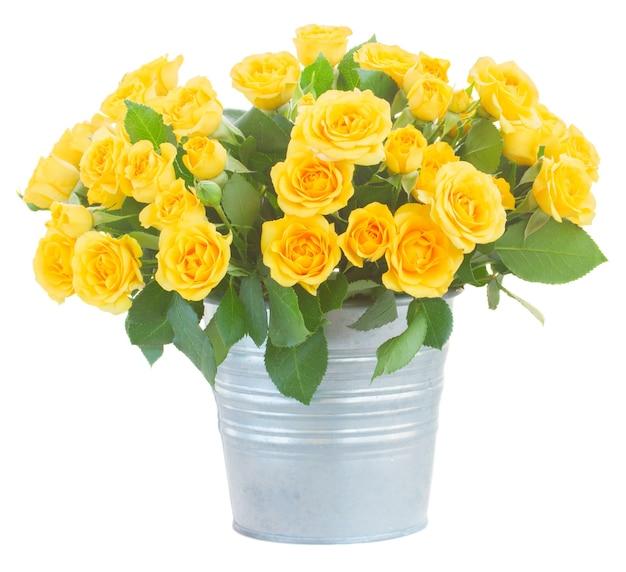 흰색 절연 금속 냄비에 녹색 잎을 가진 신선한 노란 장미의 무리