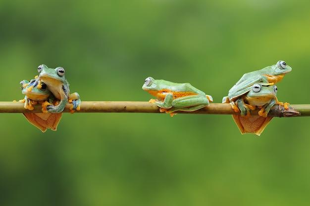 竹の棒にカエルの束