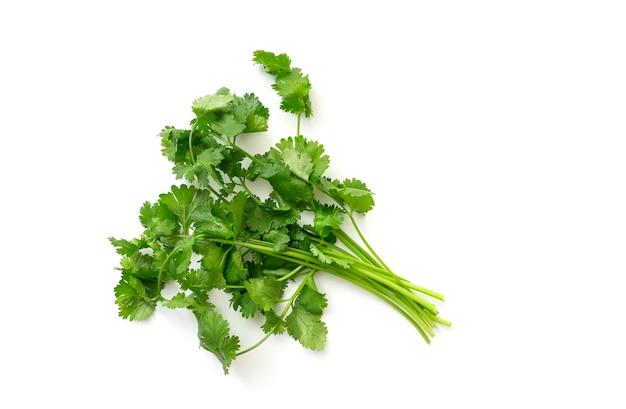 Букет из зеленой кинзы, изолированные на белом. ветка кинзы или кориандра, вид сверху