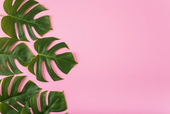Bunch of green leaves on pink