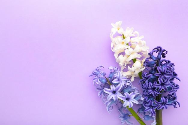 Пук цветка гиацинтов на фиолетовой предпосылке.