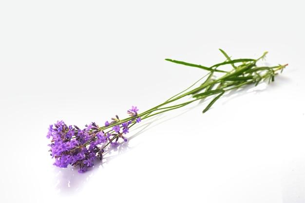 白い背景で隔離のラベンダーの花の束。