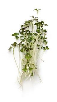 Букет из микро зеленых ростков на белом фоне