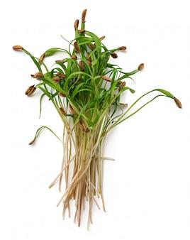 Букет из микро зеленых ростков, изолированных на белом