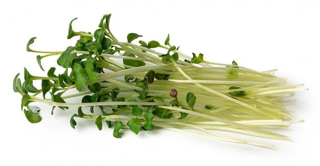 白で隔離されるマイクロ緑もやしの束