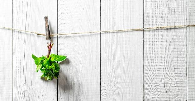 ひもにぶら下がっているミントの束。白い木製の壁に。