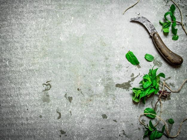 ミントの古いナイフの束。石のテーブルの上。