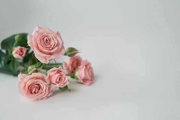흰색 바탕에 옅은 분홍색 장미 꽃의 무리