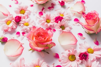 Bunch of pretty flowers and petals