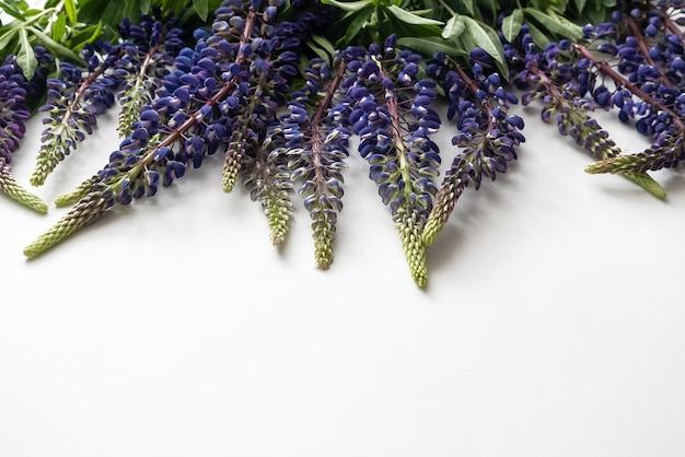 白い表面に散らばる紫色のルピナスの群れ