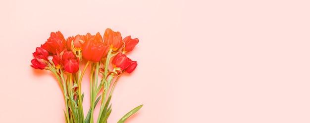 소프트 핑크에 고립 된 빨간 튤립의 무리