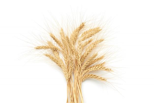 Букет из спелой золотой пшеницы на белом фоне