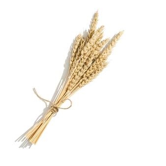 熟した小麦の穂の束が白い背景に孤立してクローズアップ小麦の穂の束