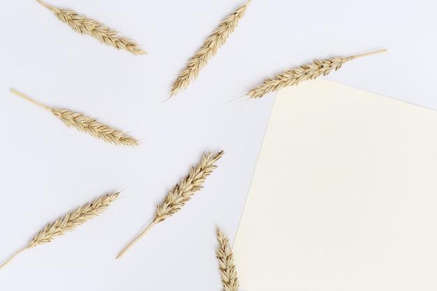 익은 밀 귀 무리 베이지 색 배경에 닫습니다. 곡물 작물의 창조적 가을 수확. 평면도