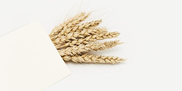 익은 밀 귀 무리 베이지 색 배경에 닫습니다. 곡물 작물의 창조적 가을 수확.