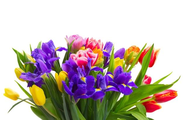 Букет из весенних тюльпанов и ирисов крупным планом, изолированные на белом фоне