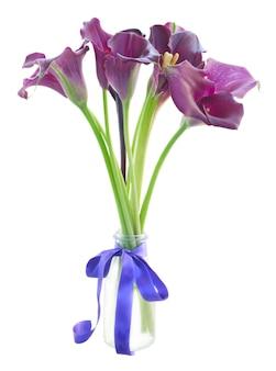 흰색 절연 꽃병에 보라색 칼라 릴리 꽃의 무리