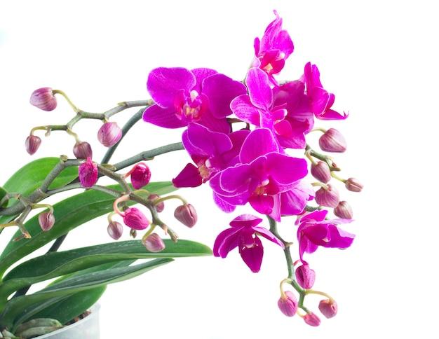 緑の葉と紫の蘭の束