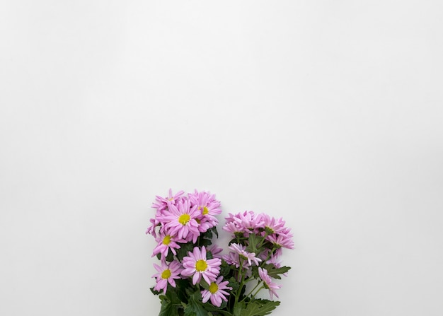 Bunch of pink daisy flowers on bottom of white backdrop