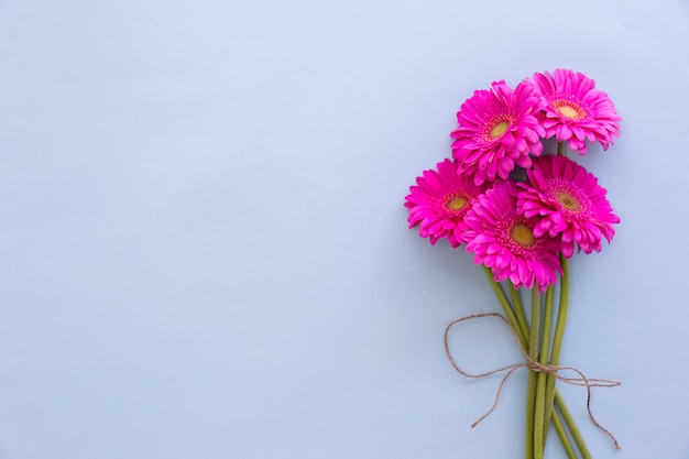 Bunch of pink gerbera flowers on colored background