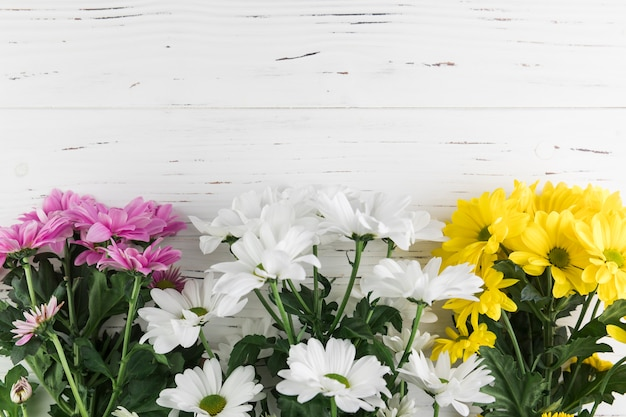 Bunch of pink; yellow and white chrysanthemum flowers on white wooden textured backdrop