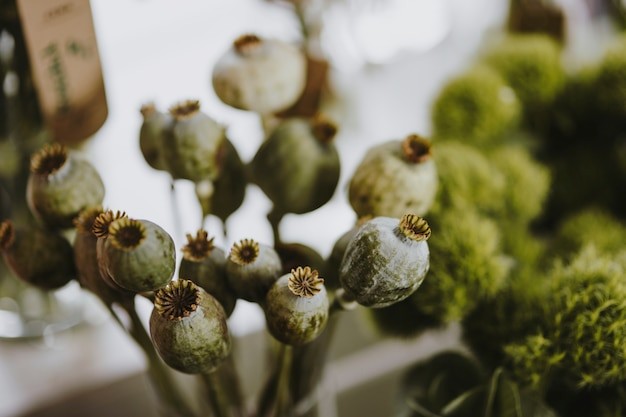 A bunch of poppy seed heads