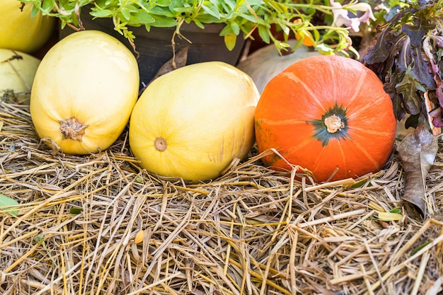Bunch of pumpkins for sale