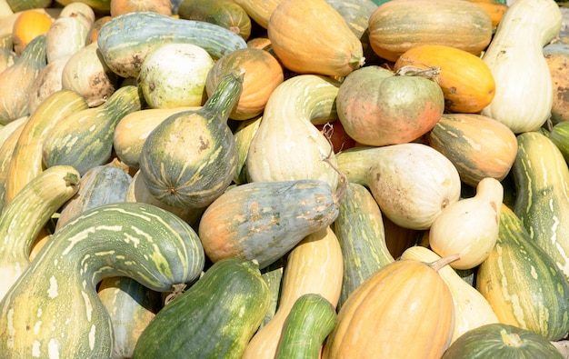 Bunch of pumpkins and squashes