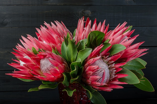 Bunch of red artichoke protea on a wooden dark background