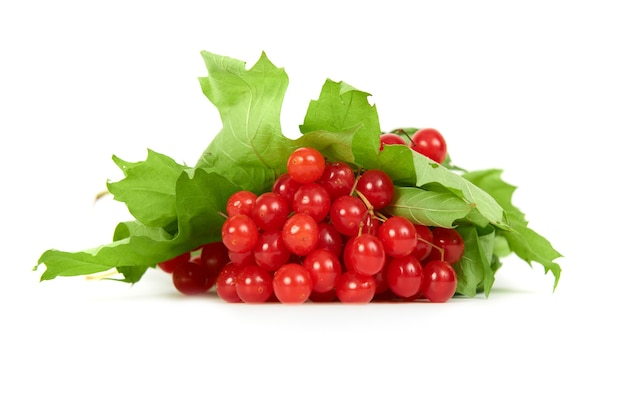 Bunch of red berries- guelder rose (viburnum opulus) with green leaves isolated on white background