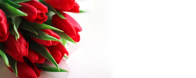 Bunch of red fresh tulips on white background template copy space