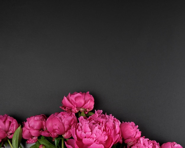 Bunch of red peonies with green leaves on a black background