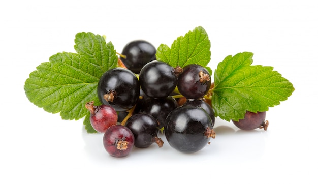 Bunch of ripe black currant berries isolated