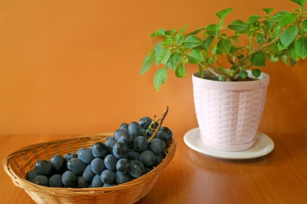Bunch of ripe blue grapes in a basket with blurry white planter of evergreen plants on orange wall