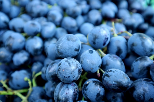 Bunch of ripe blue grapes with selective focus