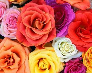 Mazzo di rose, rose
