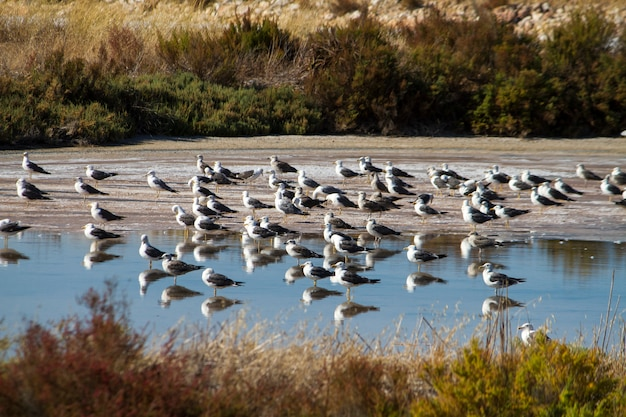 A bunch of seagulls rests on the marshlands.