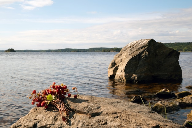 A bunch of strawberry berries lie on a stone on the shore of lake