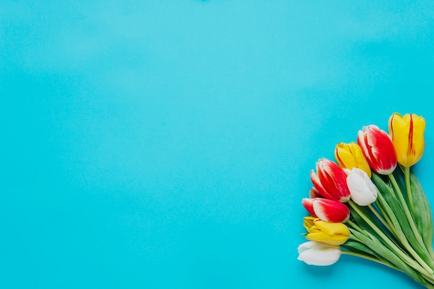 Bunch of tulips on blue backdrop