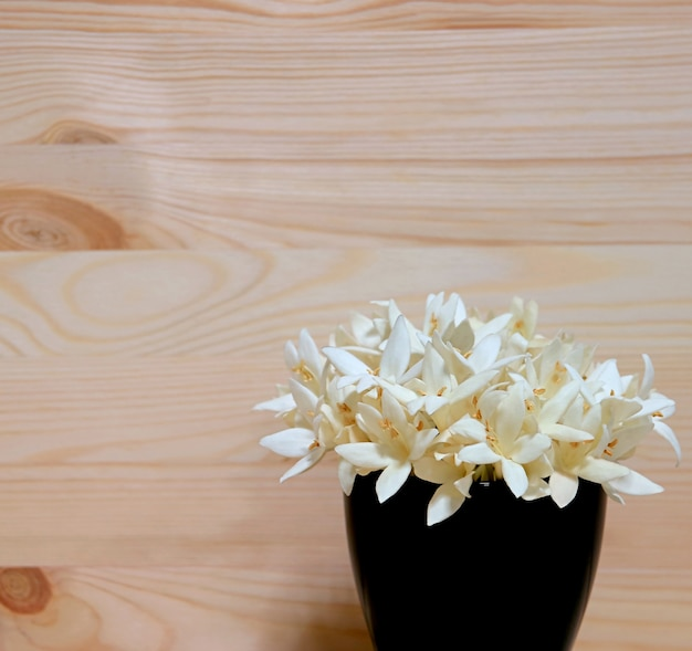 Bunch of white millingtonia flowers in a deep navy blue vase isolated on wooden backdrop