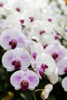 Bunch of white orchid flowers