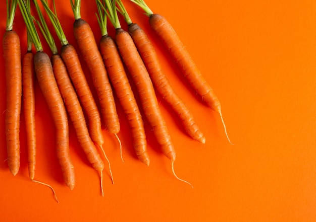 Bunch of whole fresh raw carrots on orange background. top view with copy space for your d