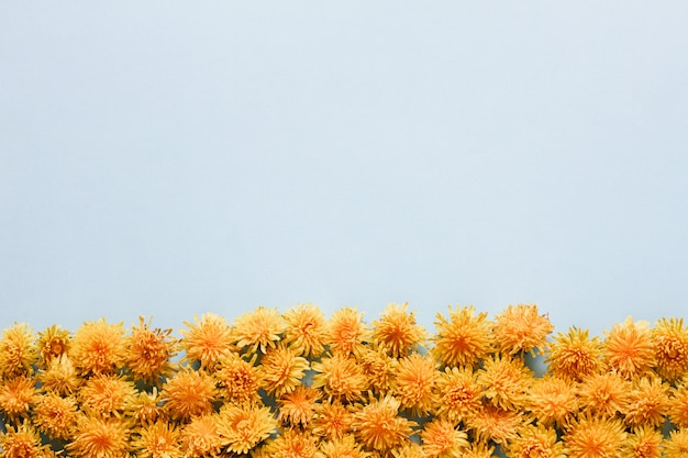 A bunch of yellow dandelion flowers are located at the bottom of the frame on a pastel blue background, place for text