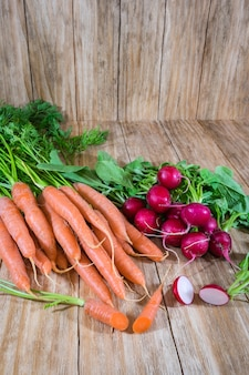 Bunches of carrots and radishes