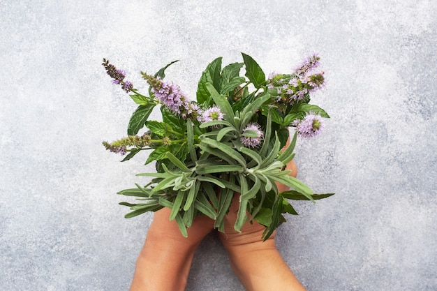 Bunches of fresh sprigs of mint and rosemary