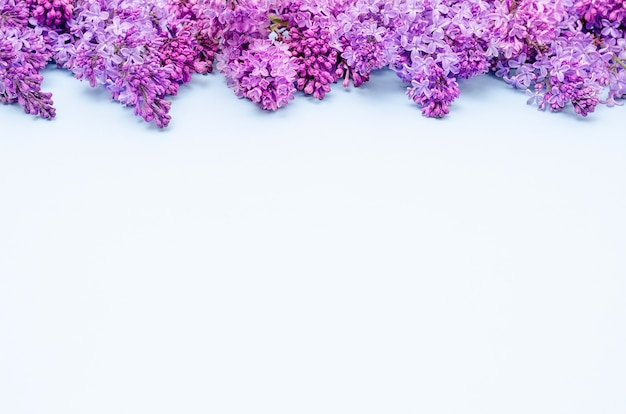 Bunches of lilacs lie in a solid line on a blue