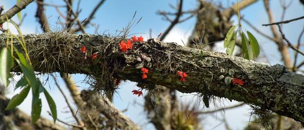 나무 줄기에 야생 붉은 난초의 큼